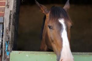 Box écuries cheval