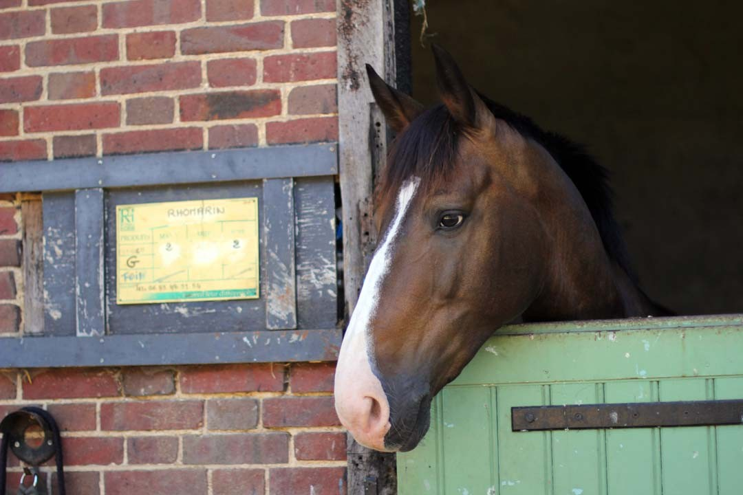 Box écuries chevaux