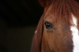 Regard cheval