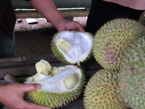 Fruit durian