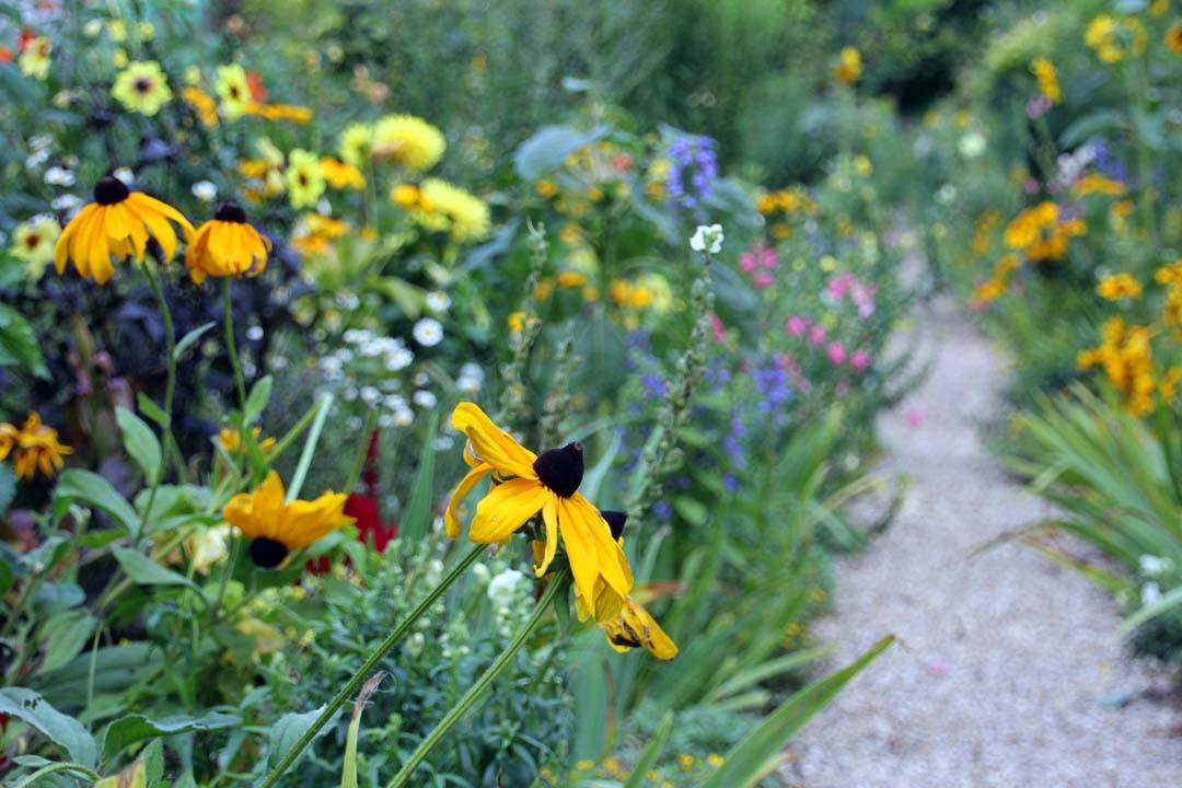 Fleurs du jardin Monet à Giverny