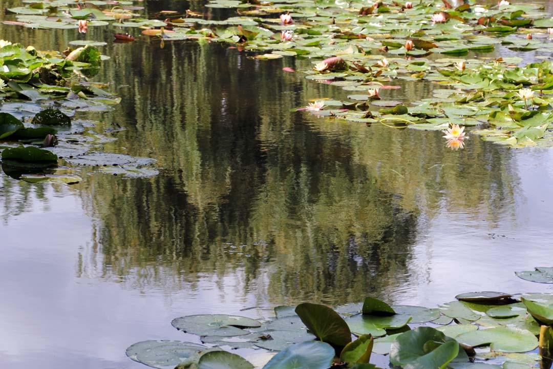 Maison et Jardins Claude Monet à Giverny Nymphéas