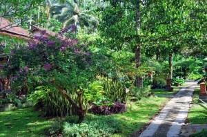 Nature Indonesie