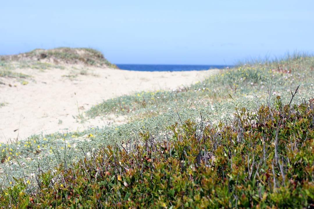 Dunes Corse
