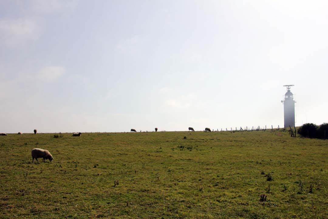 Phare et moutons Cap Gris Nez Cote d'Opale