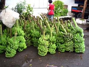 Régimes de bananes