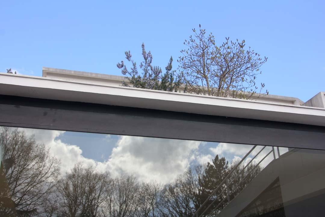 Reflet ciel bleu plantes