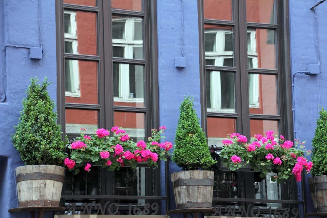 Volets bleus et geranium