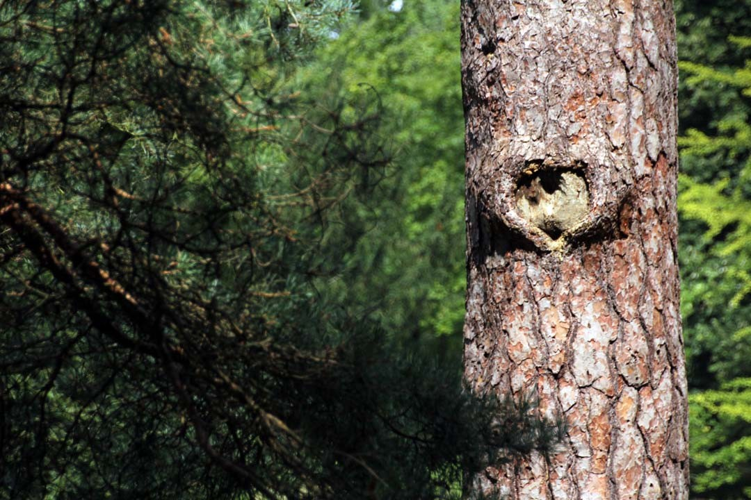 Cœur dans l'écorce d'un arbre