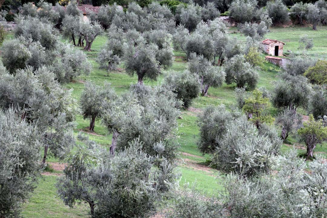 Jardins Boboli à Florence