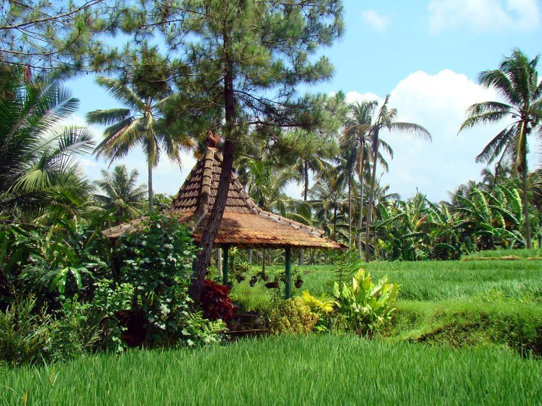 Paysage Java Indonésie