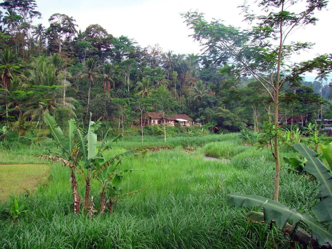 Java paysage
