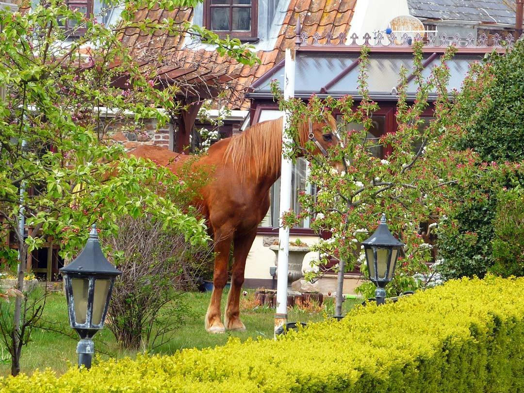 Cheval dans le jardin