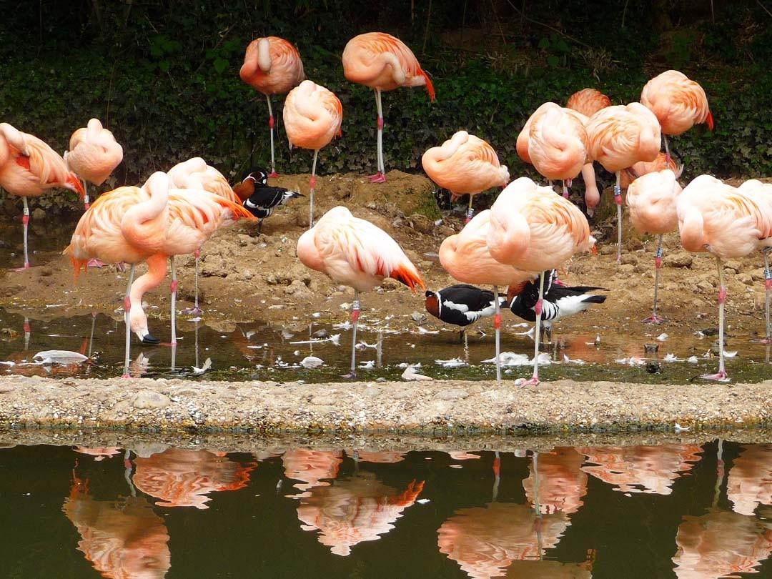 Durrell Wildlife Conservation Park à Jersey