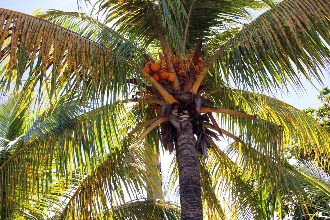 Plage de Malendure en Guadeloupe
