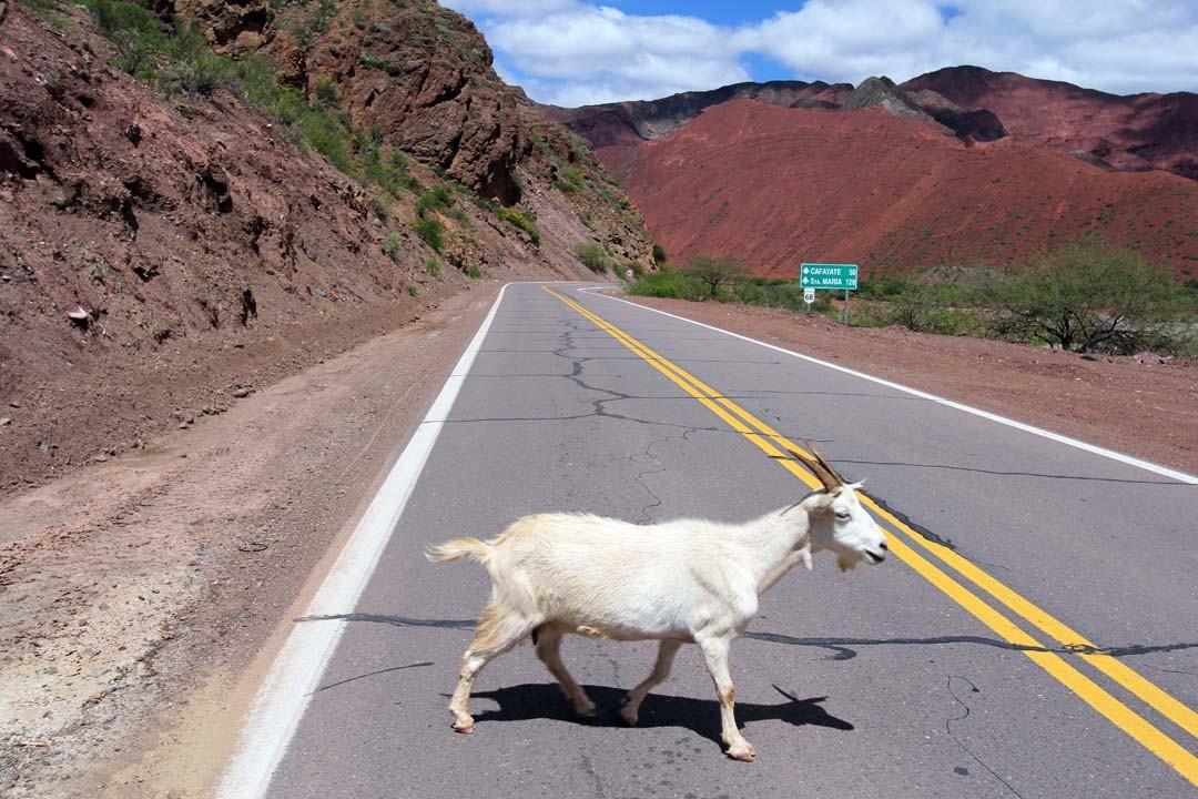 argentine road trip salta vallées Calchaquies