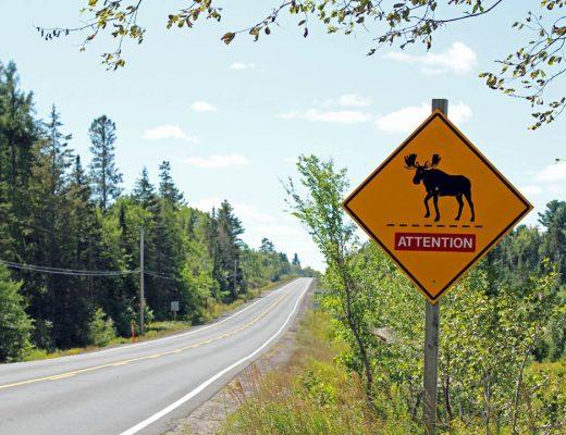 Panneau attention caribou route canada