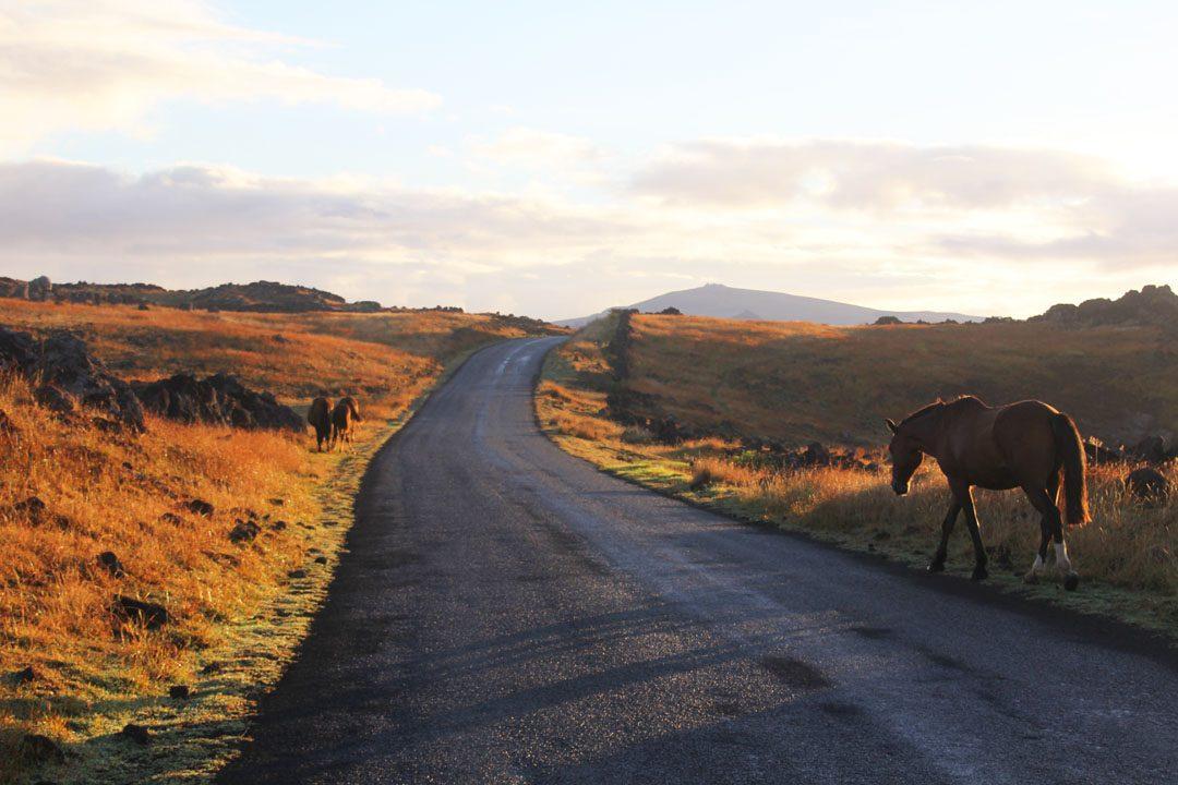 Chevaux sur l'Ile de Pâques - Rapa Nui