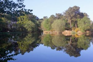 Lac de Monteneuf à Brocéliande