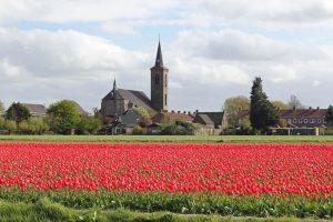 Champs de tulipes hollandais