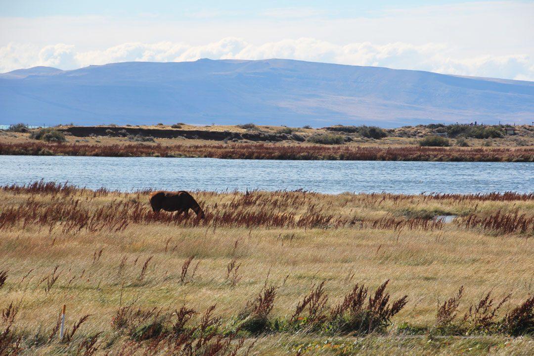 Réserve de la Laguna Nimez avec le lago Argentina