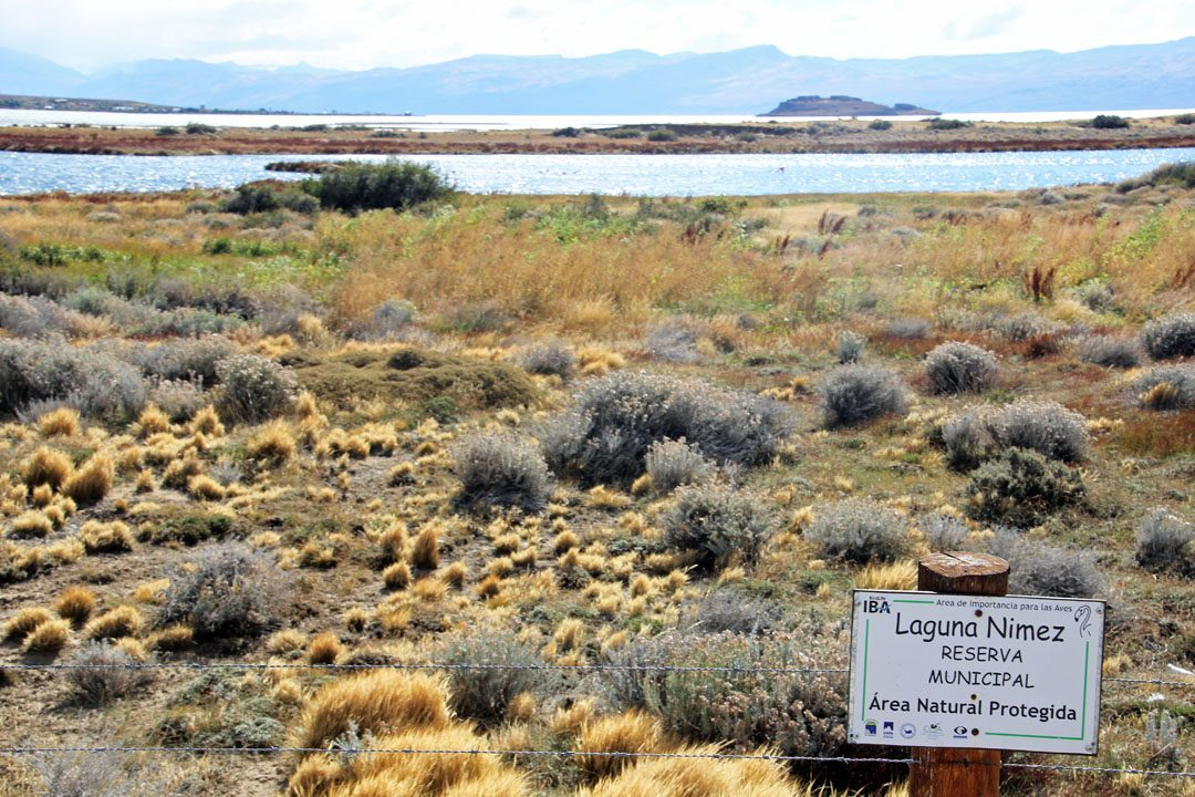 Laguna Nimez à El Calafate en Argentine