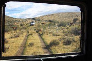 Excursion en 4x4 en Argentine