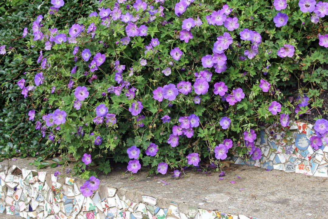 Ile fleurie de Guernesey