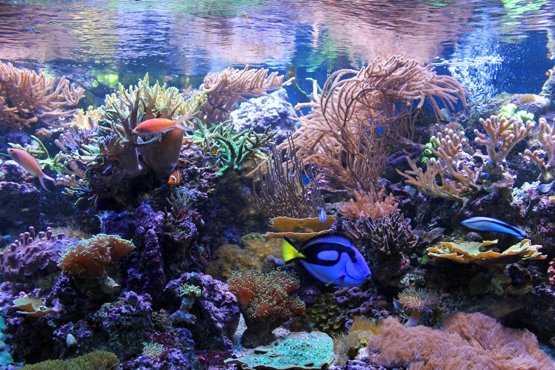 Aquarium Sea Life à Blankenberge en Belgique