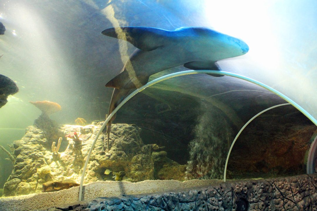 Aquarium Sea Life à Blankenberge