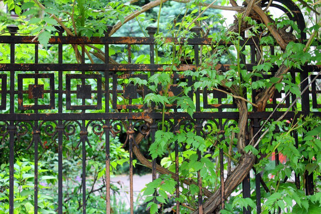 Joli portail et verdure dans le quartier arménien de Bucarest