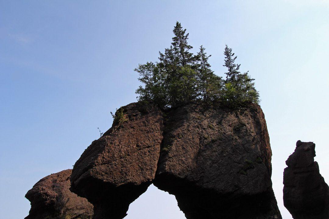 Les Hopewell Rocks ou pots de fleurs au Nouveau-Brunswick au Canada