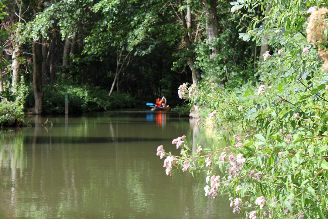 Visiter le Marais Poitevin en famille