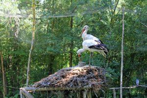 Parc ornithologique du Marais Poitevin