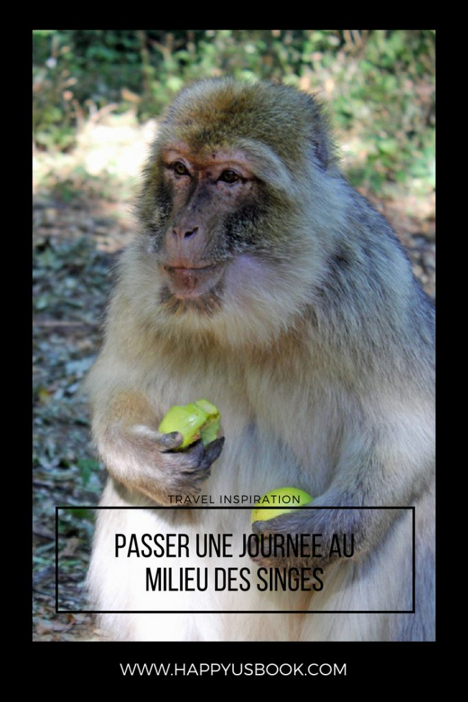 Passer une journée au milieu des singes | www.happyusbook.com