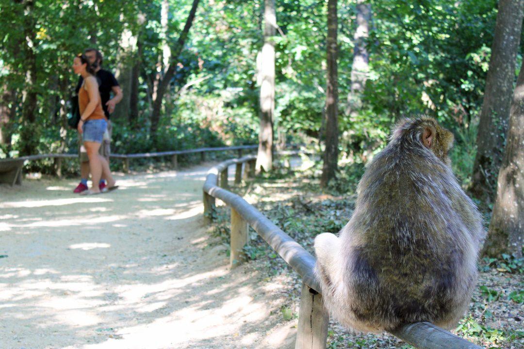 Visiter la vallée des singes