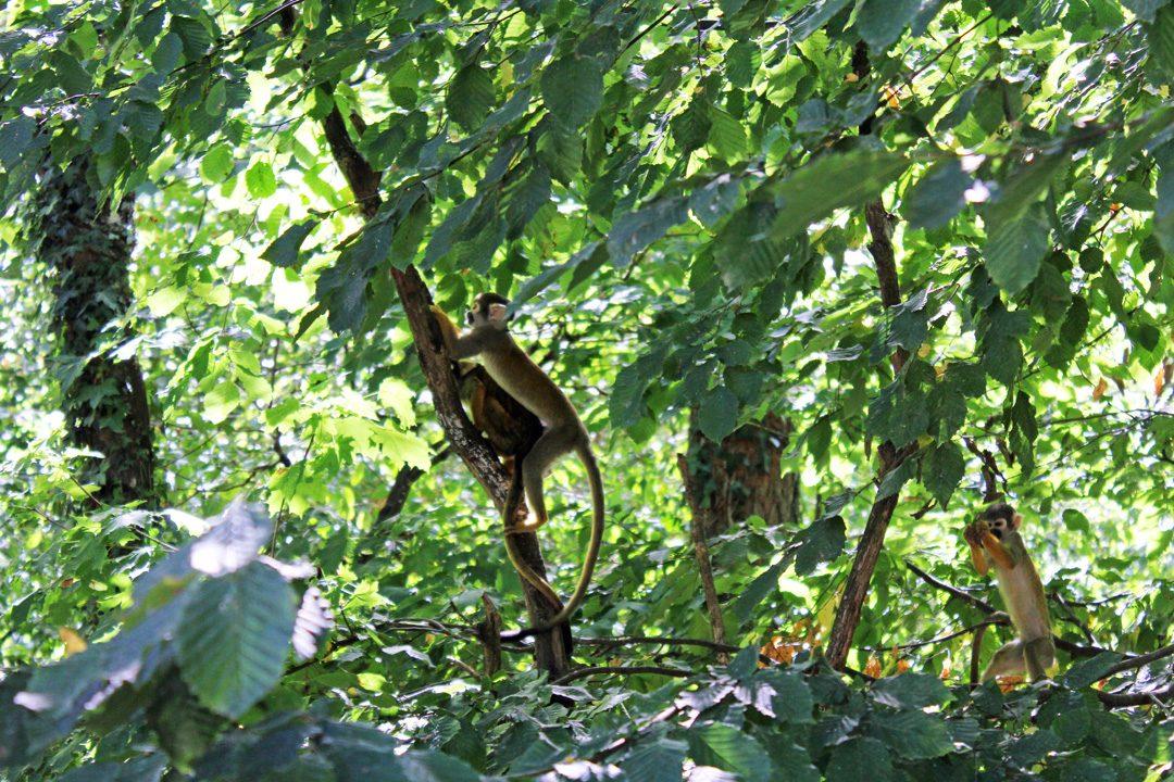 Observer les primates à la vallée des singes