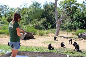 Visiter la vallée des singes en famille